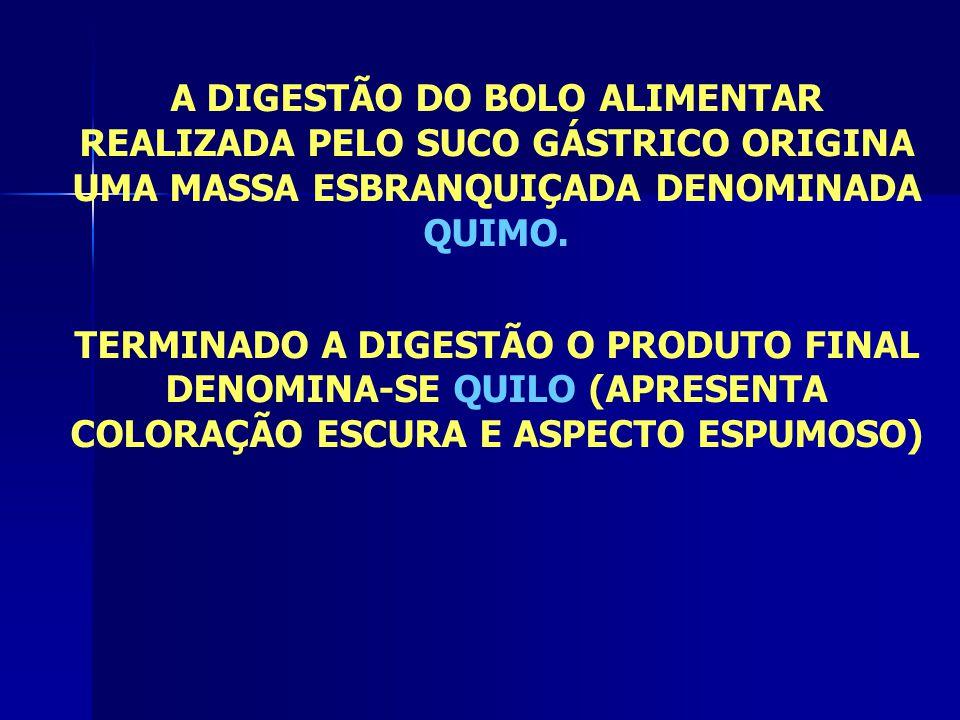 A DIGESTÃO DO BOLO ALIMENTAR REALIZADA PELO SUCO GÁSTRICO ORIGINA UMA MASSA ESBRANQUIÇADA DENOMINADA QUIMO.