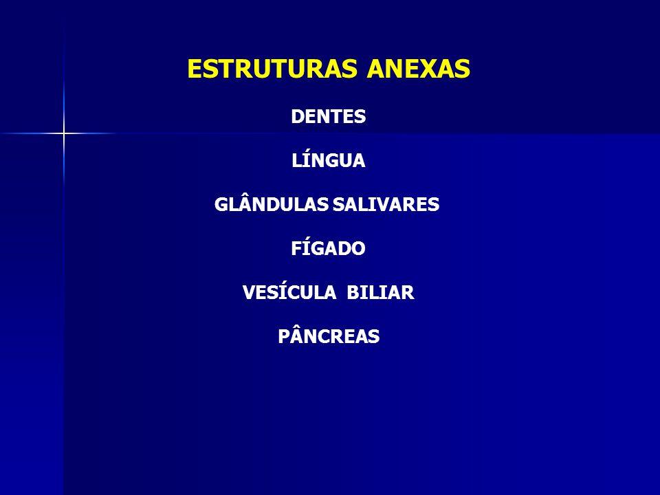 ESTRUTURAS ANEXAS DENTES LÍNGUA GLÂNDULAS SALIVARES FÍGADO
