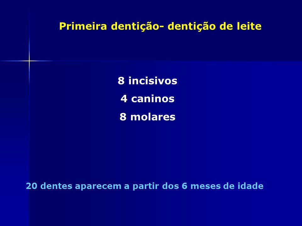 8 incisivos 4 caninos 8 molares
