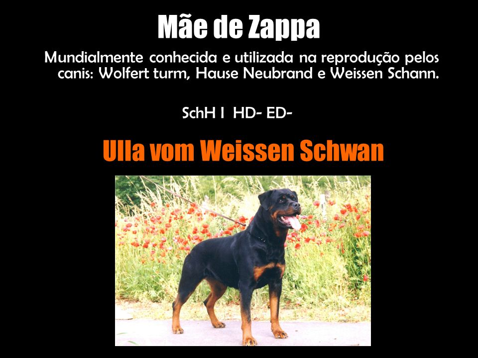 Ulla vom Weissen Schwan