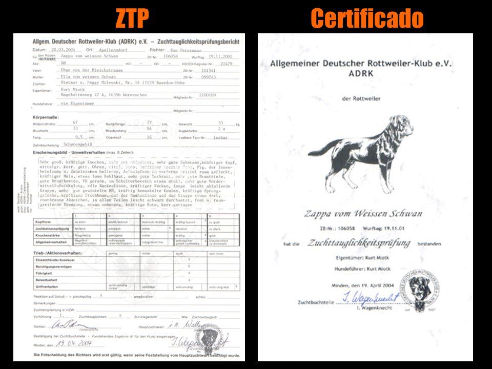 ZTP Certificado