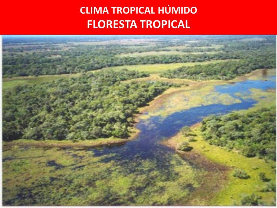 CLIMA TROPICAL HÚMIDO FLORESTA TROPICAL