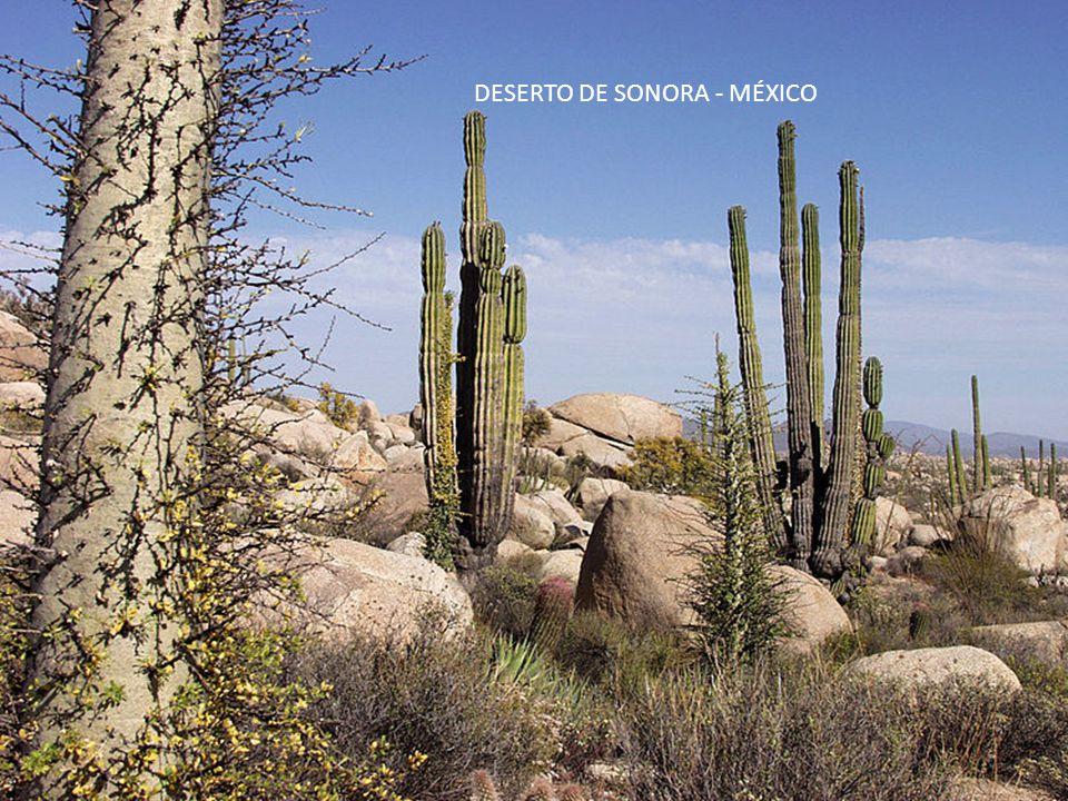 DESERTO DE SONORA - MÉXICO