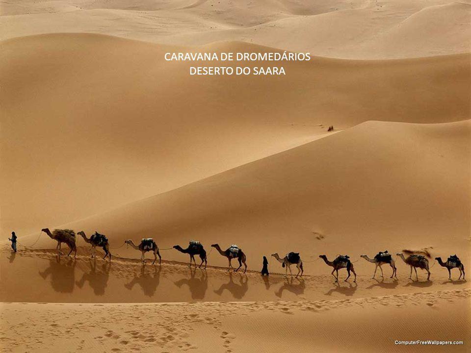 CARAVANA DE DROMEDÁRIOS