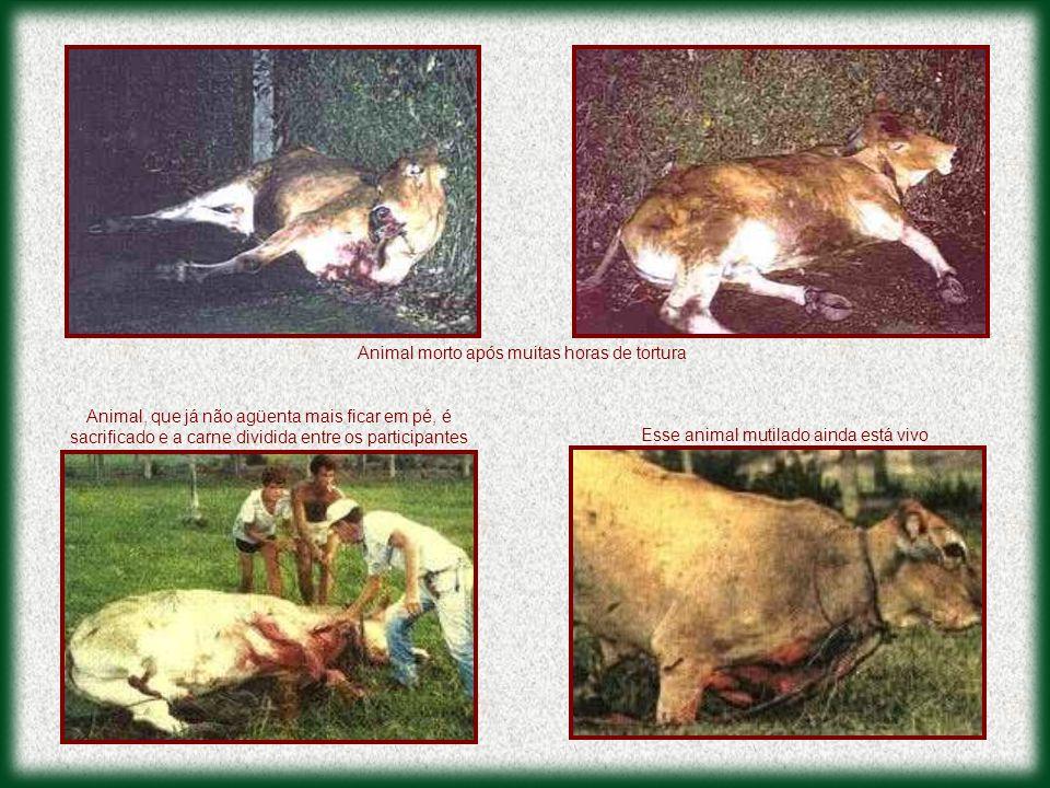 Animal morto após muitas horas de tortura