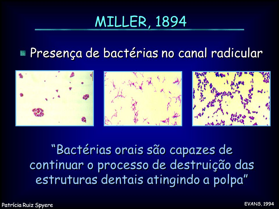 MILLER, 1894 Presença de bactérias no canal radicular