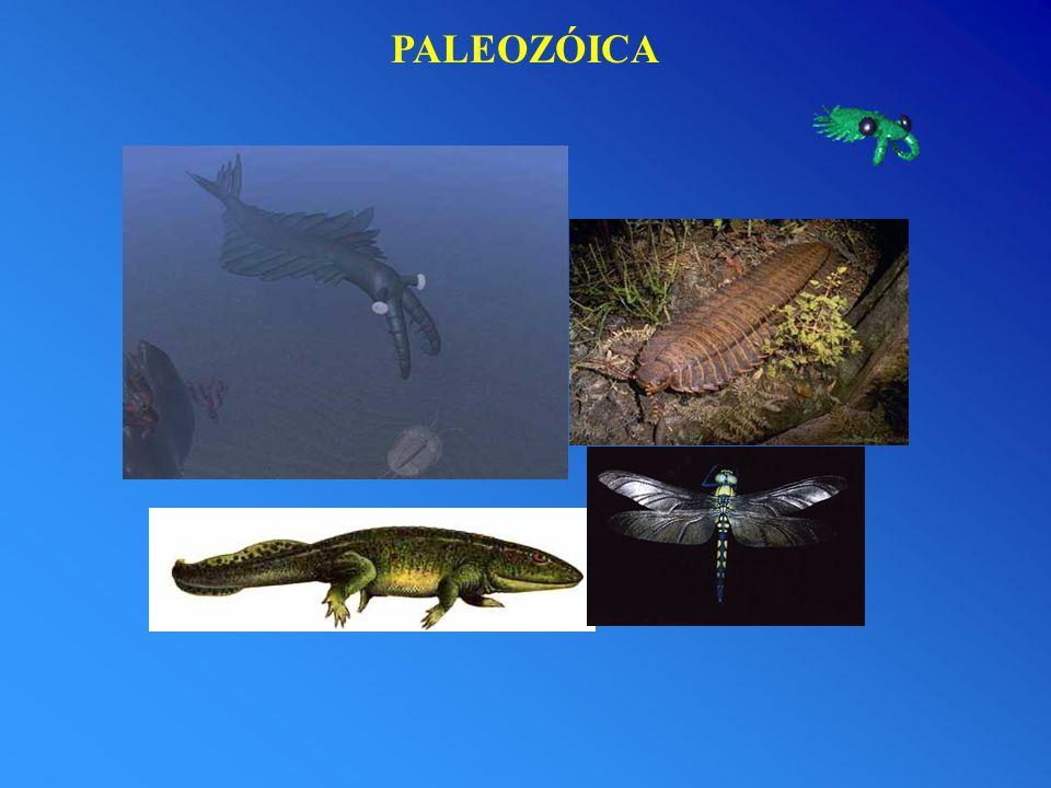 PALEOZÓICA
