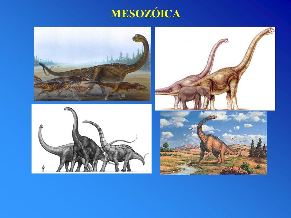 MESOZÓICA