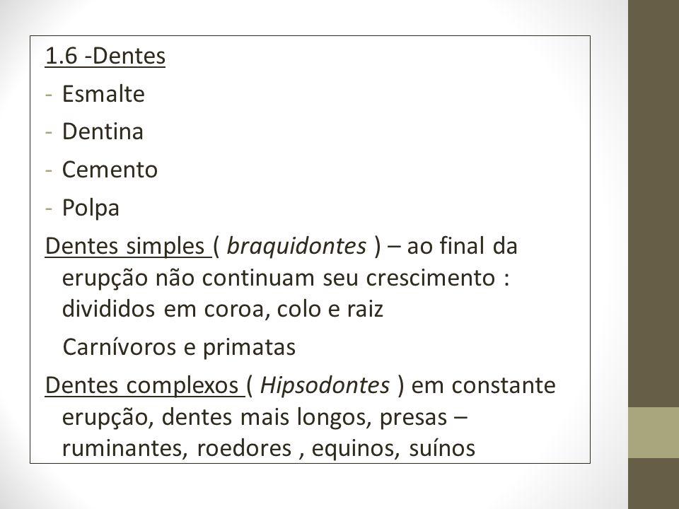 1.6 -Dentes Esmalte. Dentina. Cemento. Polpa.