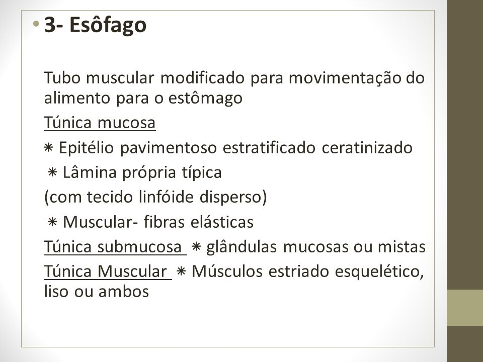 3- Esôfago Tubo muscular modificado para movimentação do alimento para o estômago. Túnica mucosa. ٭ Epitélio pavimentoso estratificado ceratinizado.