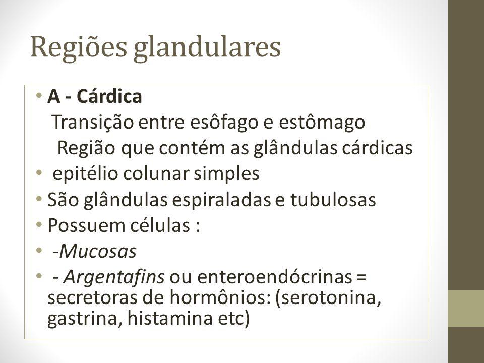 Regiões glandulares A - Cárdica