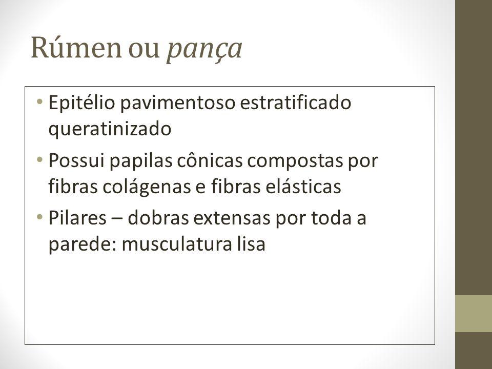 Rúmen ou pança Epitélio pavimentoso estratificado queratinizado