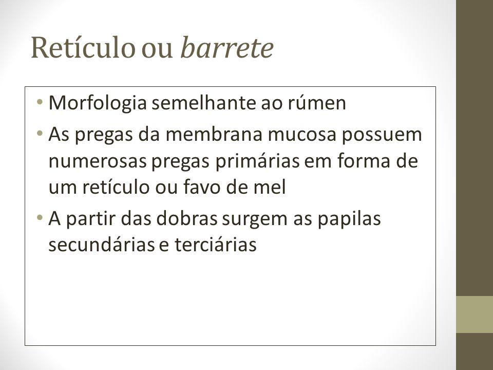 Retículo ou barrete Morfologia semelhante ao rúmen