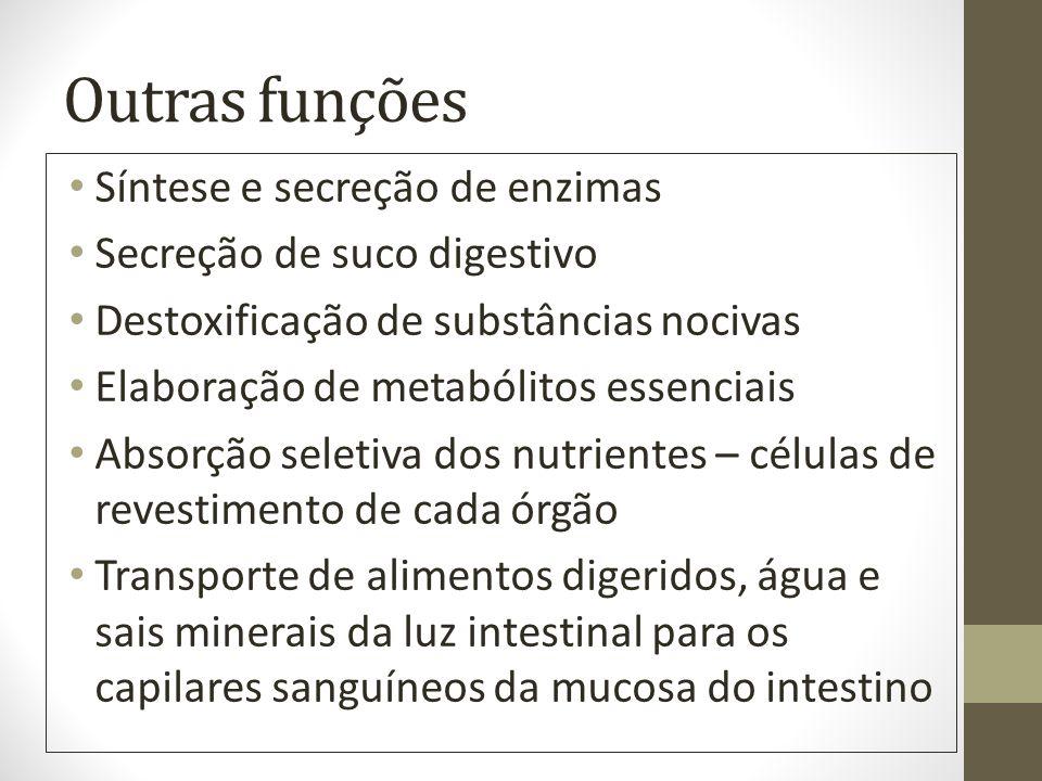Outras funções Síntese e secreção de enzimas