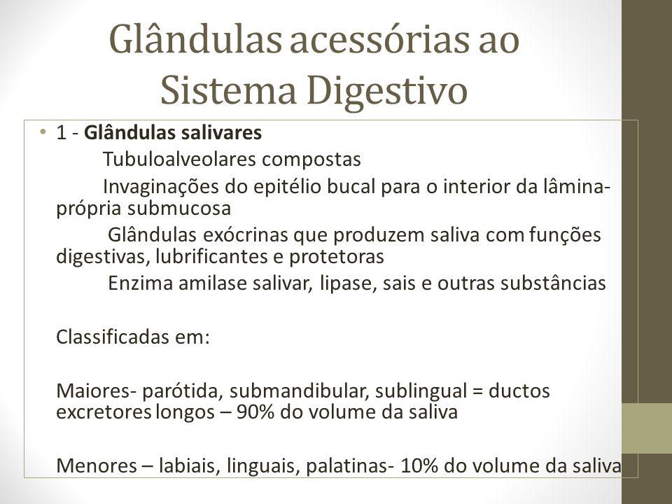 Glândulas acessórias ao Sistema Digestivo