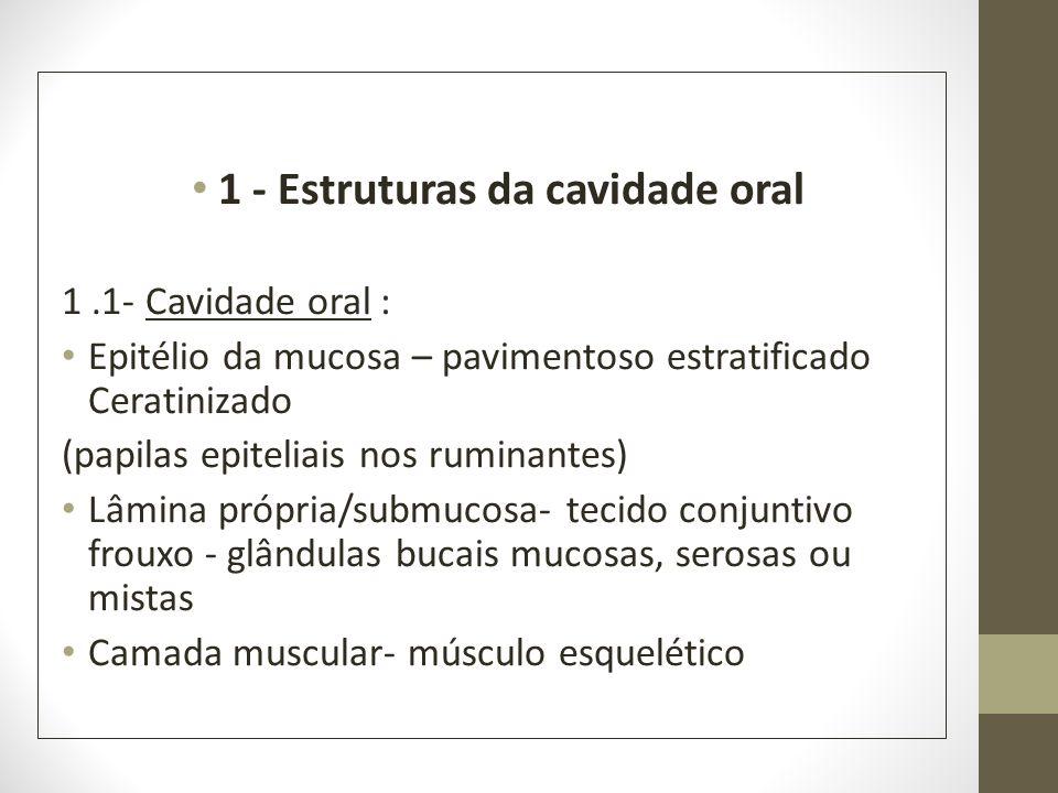 1 - Estruturas da cavidade oral