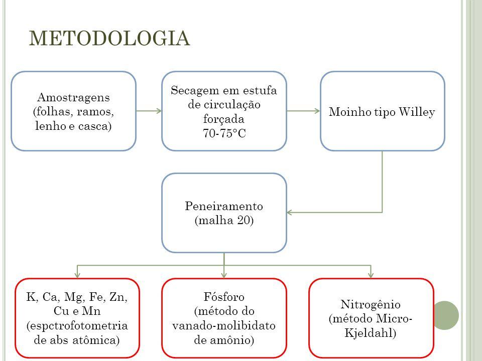 METODOLOGIA Amostragens (folhas, ramos, lenho e casca)