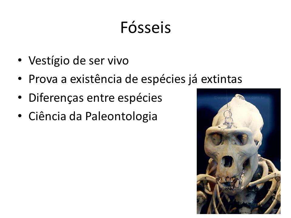 Fósseis Vestígio de ser vivo