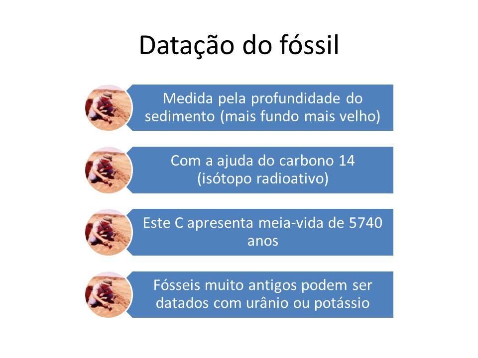 Datação do fóssil Medida pela profundidade do sedimento (mais fundo mais velho) Com a ajuda do carbono 14 (isótopo radioativo)