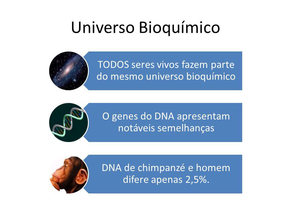 Universo Bioquímico TODOS seres vivos fazem parte do mesmo universo bioquímico. O genes do DNA apresentam notáveis semelhanças.