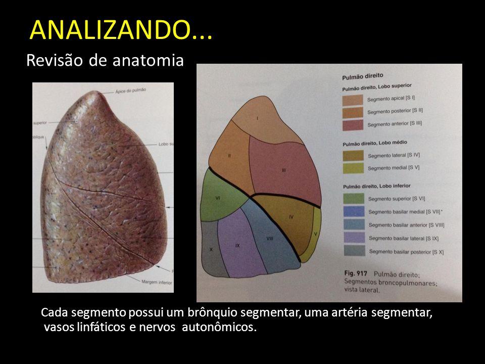 ANALIZANDO... Revisão de anatomia