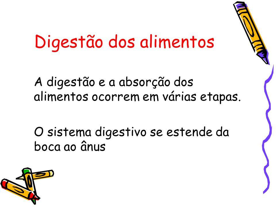 Digestão dos alimentos
