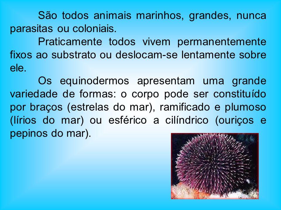 São todos animais marinhos, grandes, nunca parasitas ou coloniais.