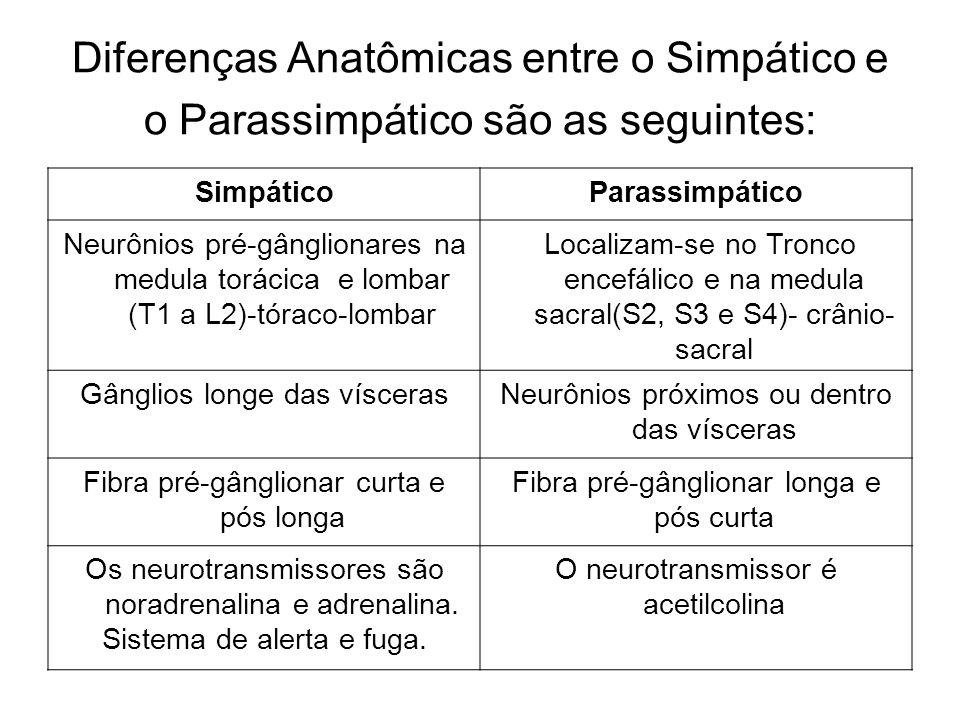 Diferenças Anatômicas entre o Simpático e o Parassimpático são as seguintes: