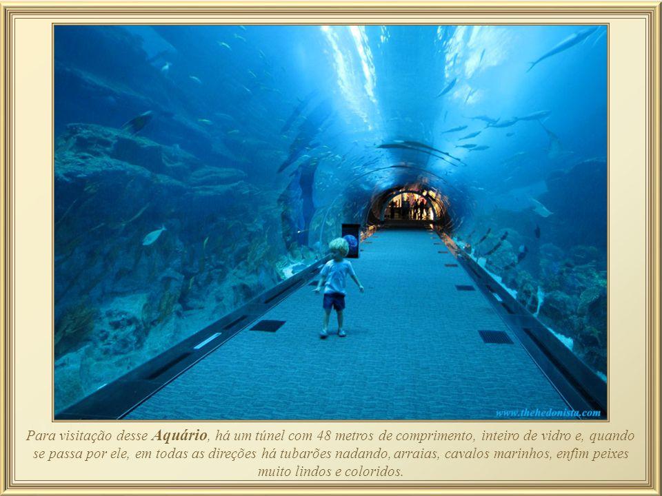 Para visitação desse Aquário, há um túnel com 48 metros de comprimento, inteiro de vidro e, quando se passa por ele, em todas as direções há tubarões nadando, arraias, cavalos marinhos, enfim peixes muito lindos e coloridos.