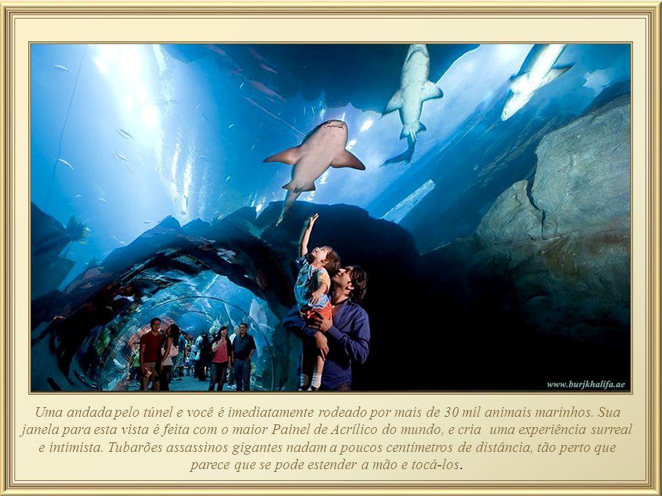 Uma andada pelo túnel e você é imediatamente rodeado por mais de 30 mil animais marinhos.