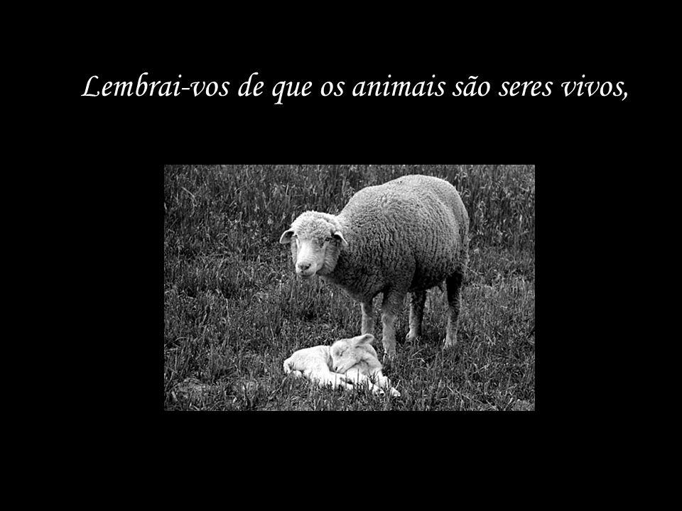 Lembrai-vos de que os animais são seres vivos,
