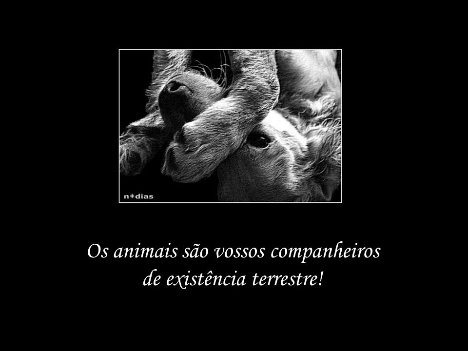 Os animais são vossos companheiros de existência terrestre!