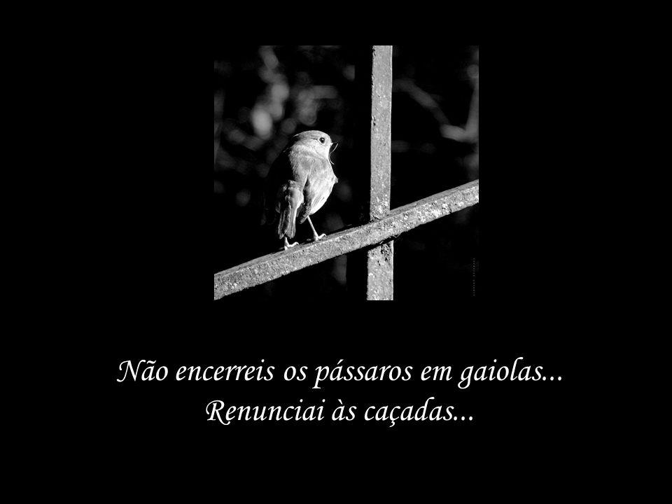 Não encerreis os pássaros em gaiolas...