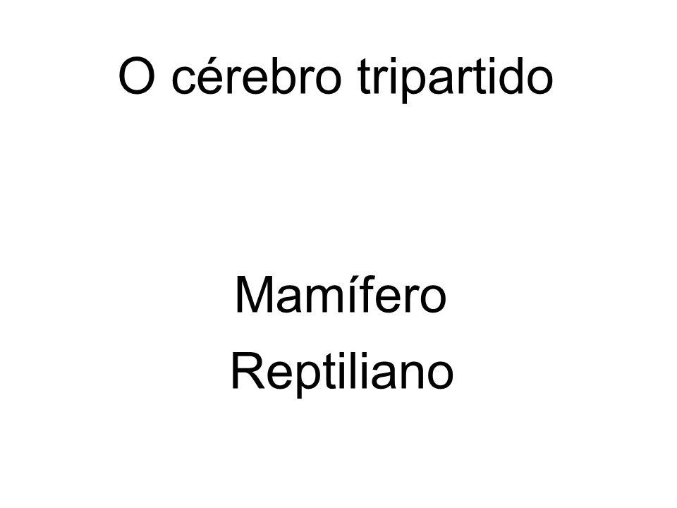 O cérebro tripartido Mamífero Reptiliano