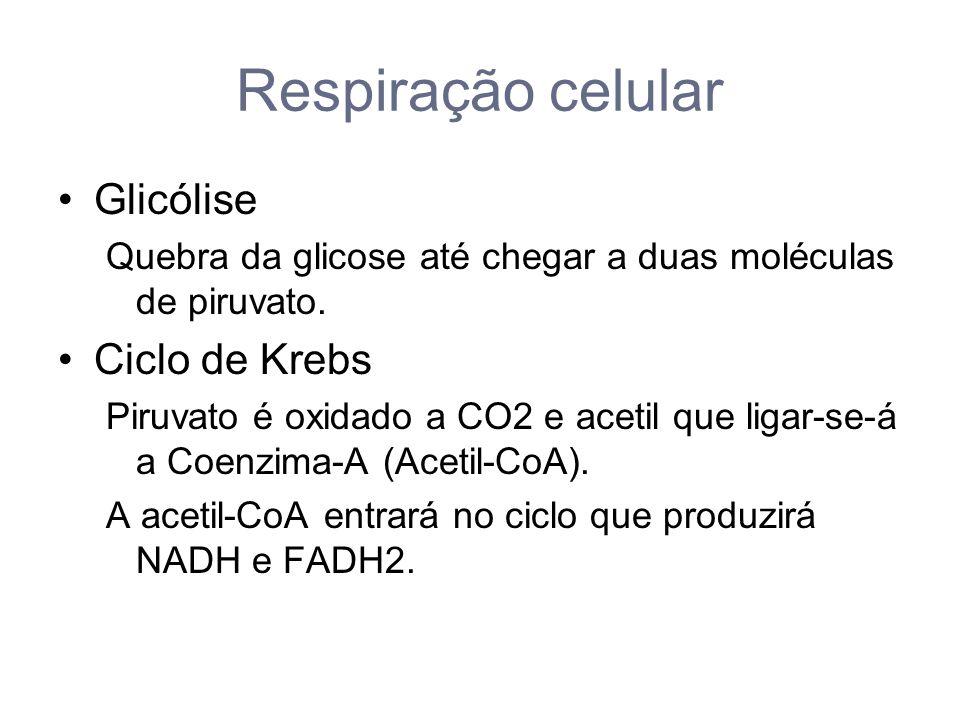 Respiração celular Glicólise Ciclo de Krebs