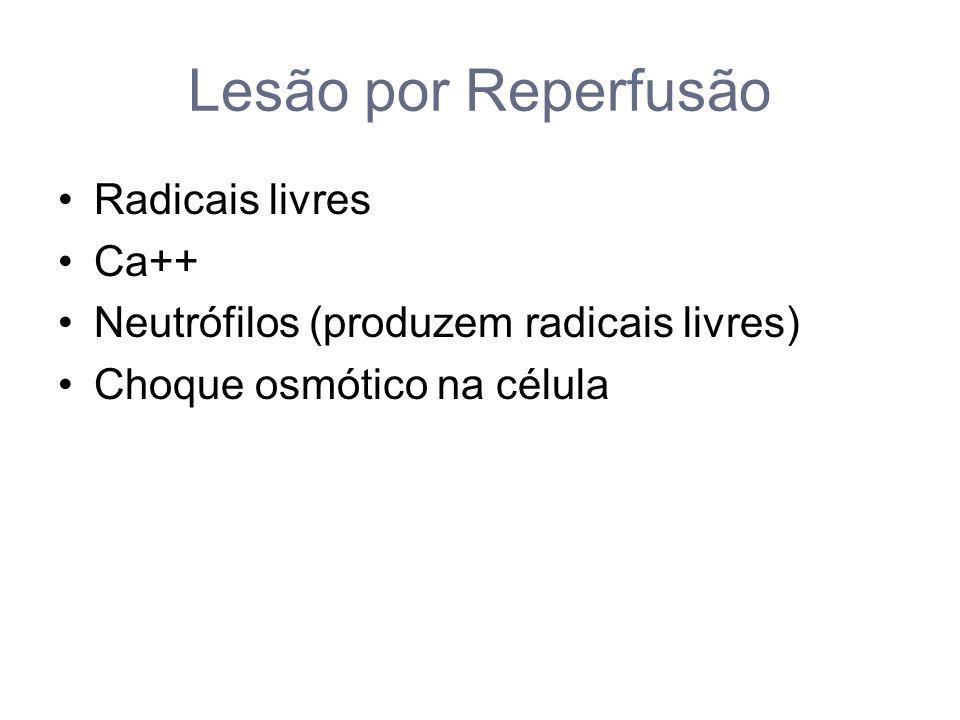 Lesão por Reperfusão Radicais livres Ca++