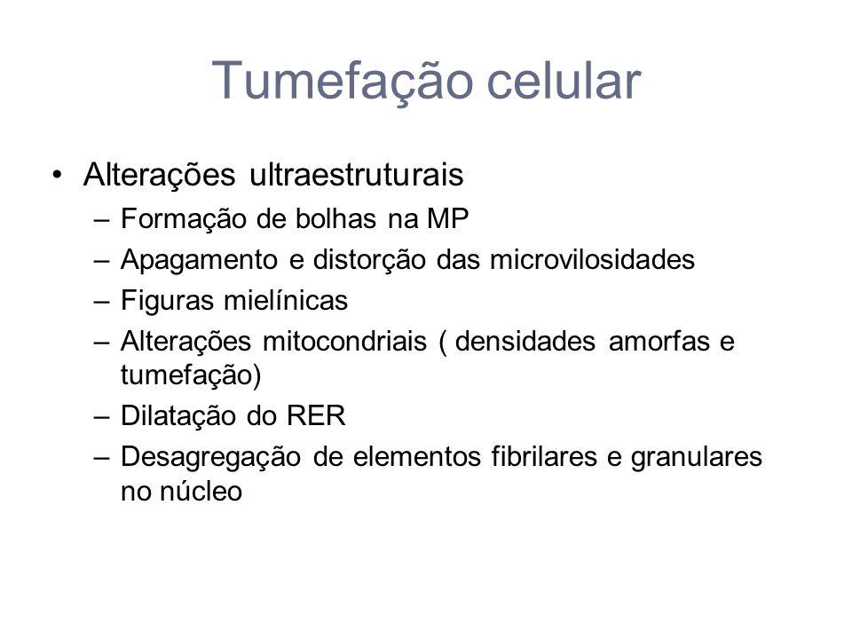Tumefação celular Alterações ultraestruturais Formação de bolhas na MP
