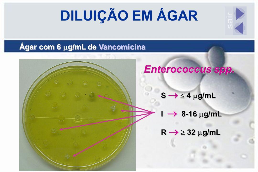 DILUIÇÃO EM ÁGAR sair Enterococcus spp.