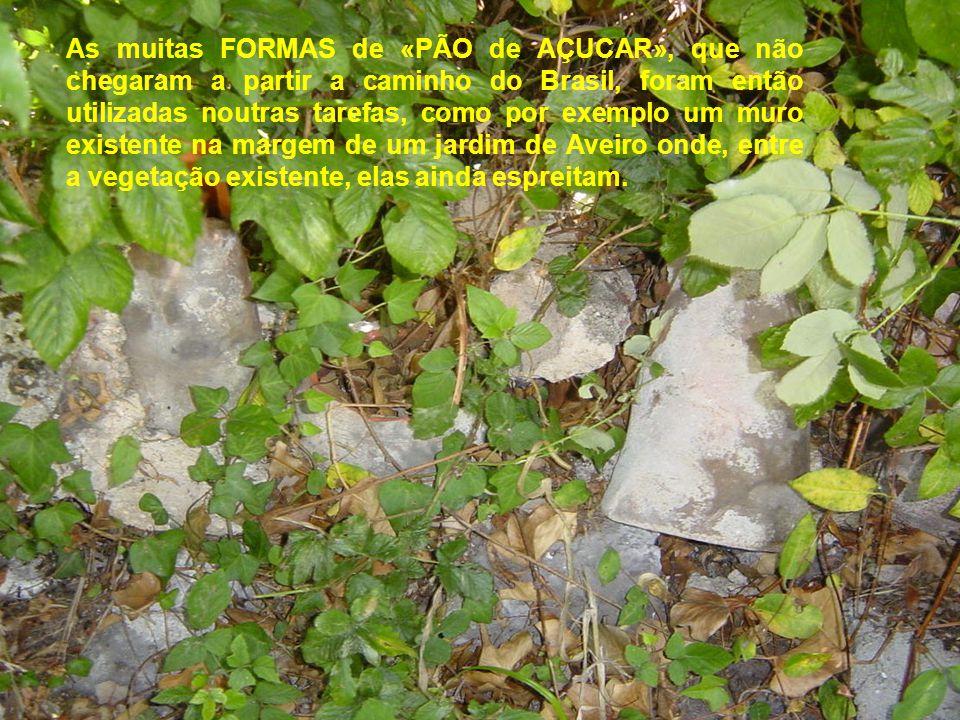 As muitas FORMAS de «PÃO de AÇUCAR», que não chegaram a partir a caminho do Brasil, foram então utilizadas noutras tarefas, como por exemplo um muro existente na margem de um jardim de Aveiro onde, entre a vegetação existente, elas ainda espreitam.