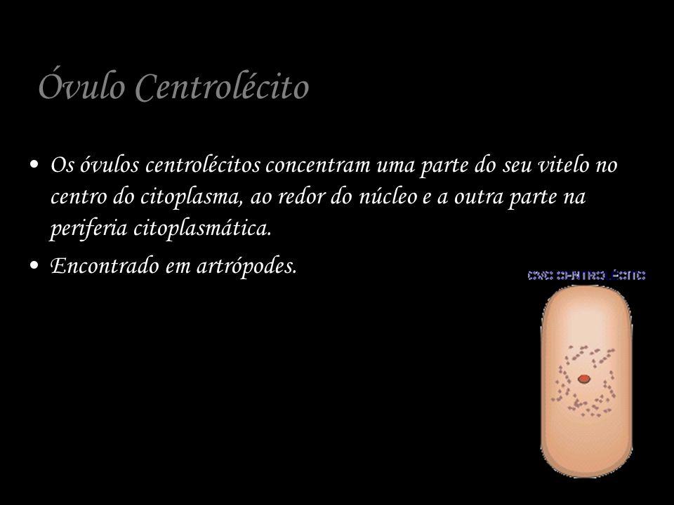 Óvulo Centrolécito