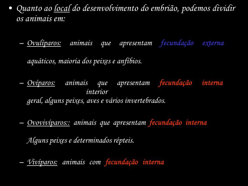 Quanto ao local do desenvolvimento do embrião, podemos dividir os animais em: