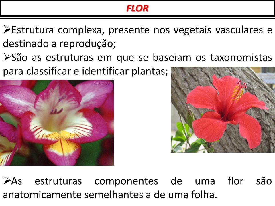 FLOR Estrutura complexa, presente nos vegetais vasculares e destinado a reprodução;