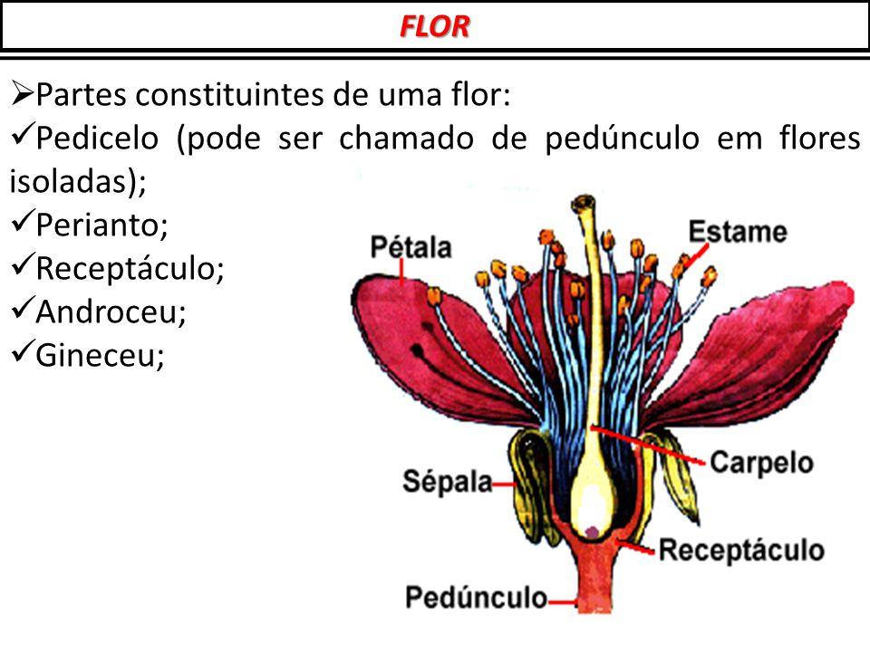 Partes constituintes de uma flor: