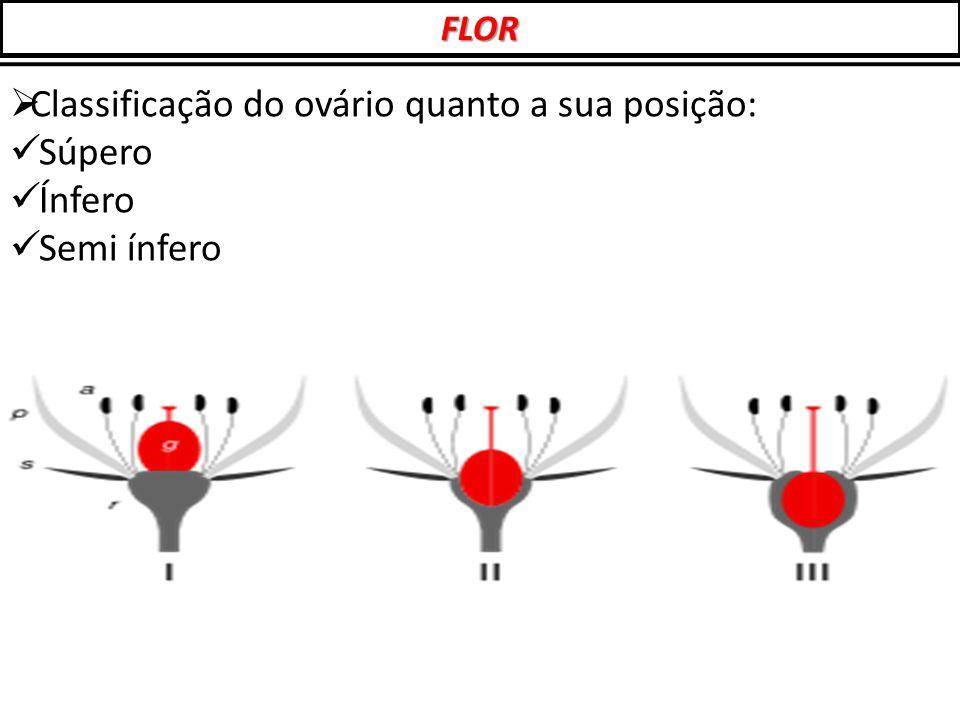 Classificação do ovário quanto a sua posição: Súpero Ínfero
