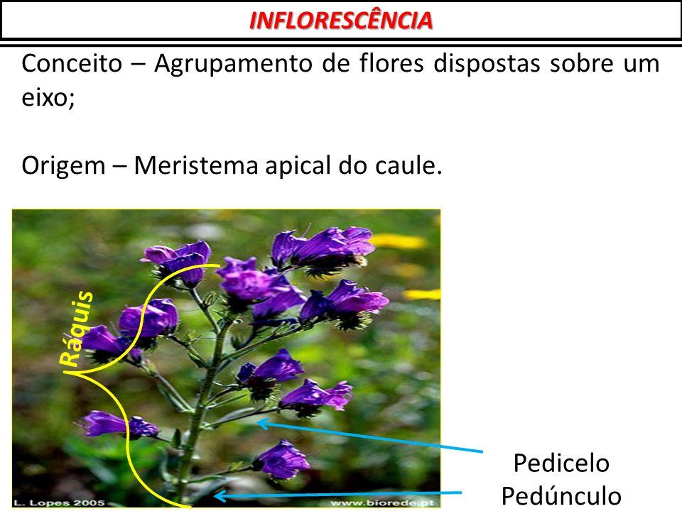 Conceito – Agrupamento de flores dispostas sobre um eixo;