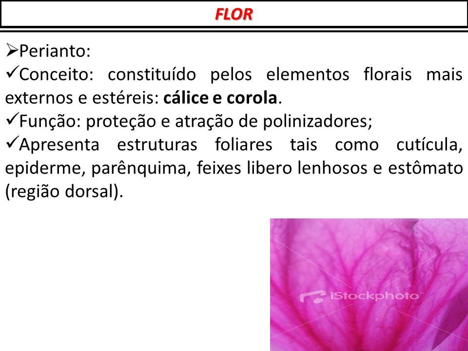Função: proteção e atração de polinizadores;