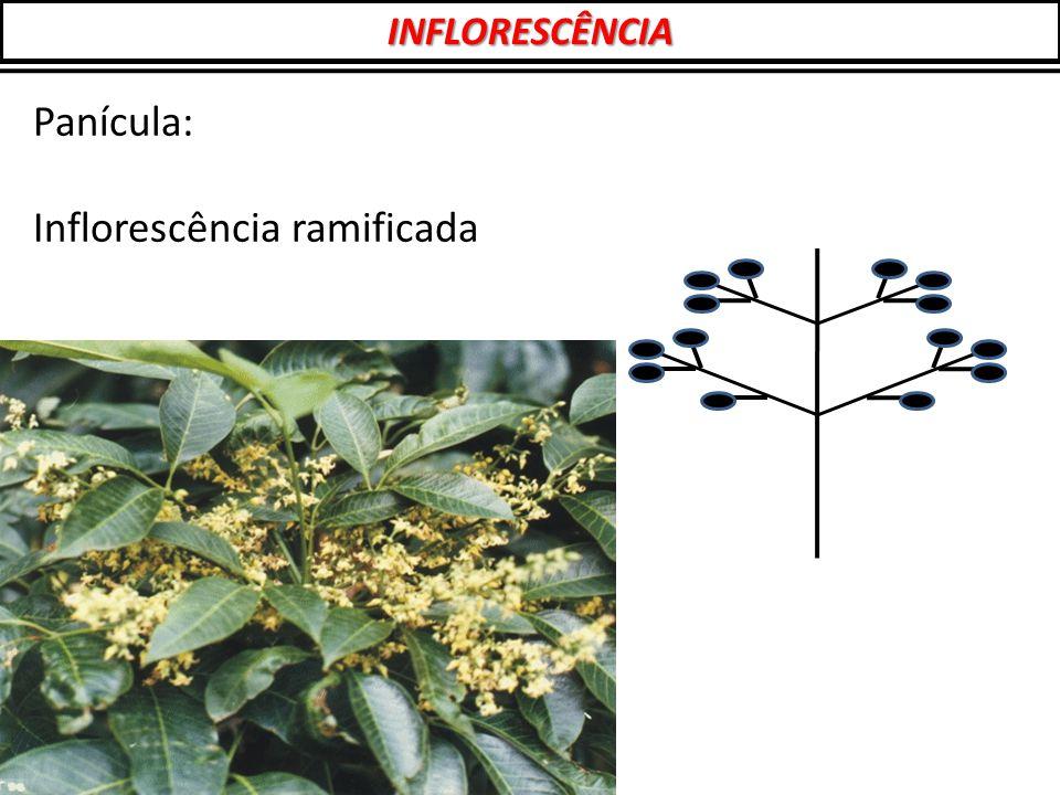 Inflorescência ramificada