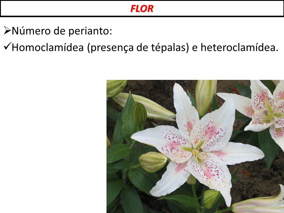 Homoclamídea (presença de tépalas) e heteroclamídea.