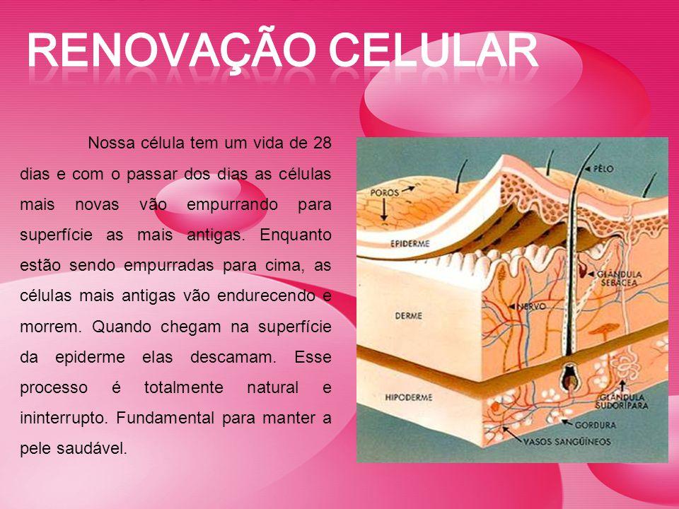 Renovação celular