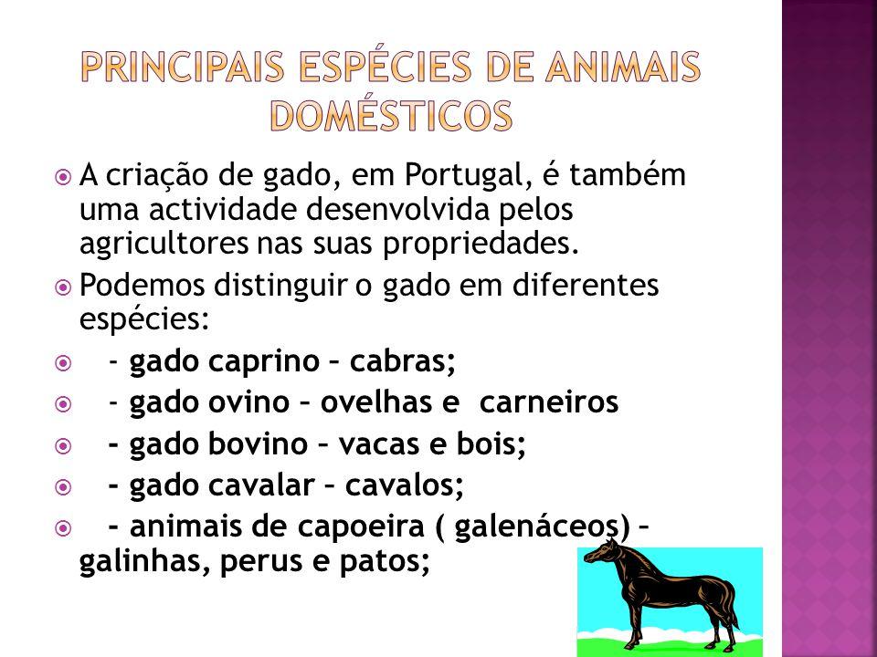 Principais espécies de animais domésticos